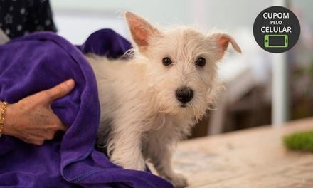 Banho e tosa higiênica para cães e gatos na Império Dog – Ipiranga